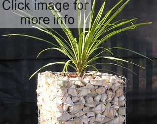 tall gabion planter